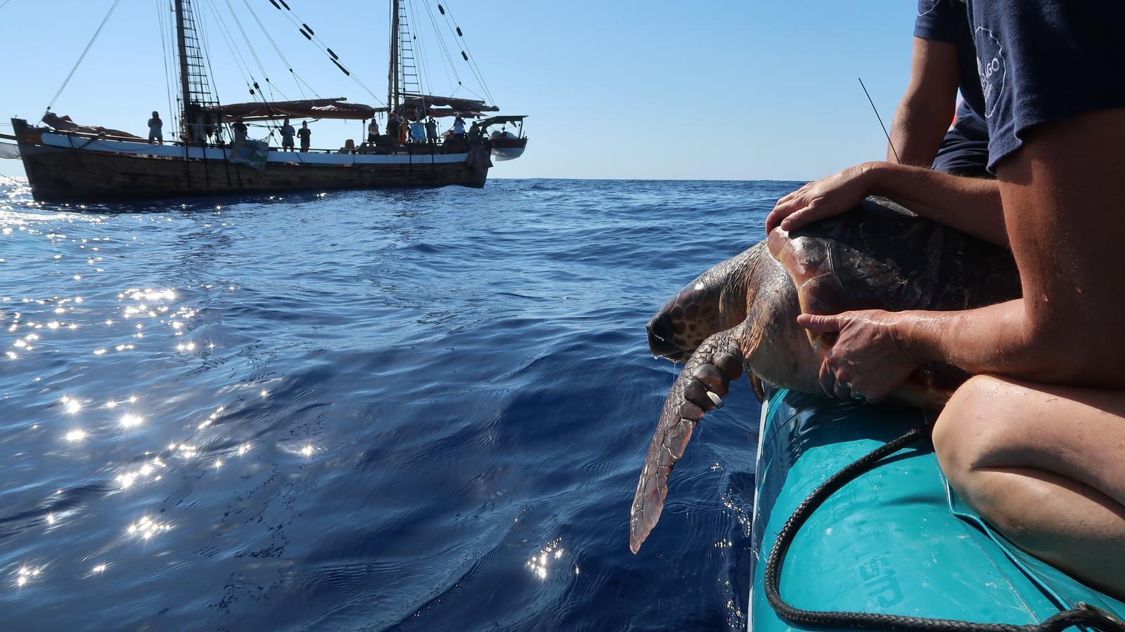 Moment de l'alliberament de la tortuga número 1.000 de totes les que han estat rescatades