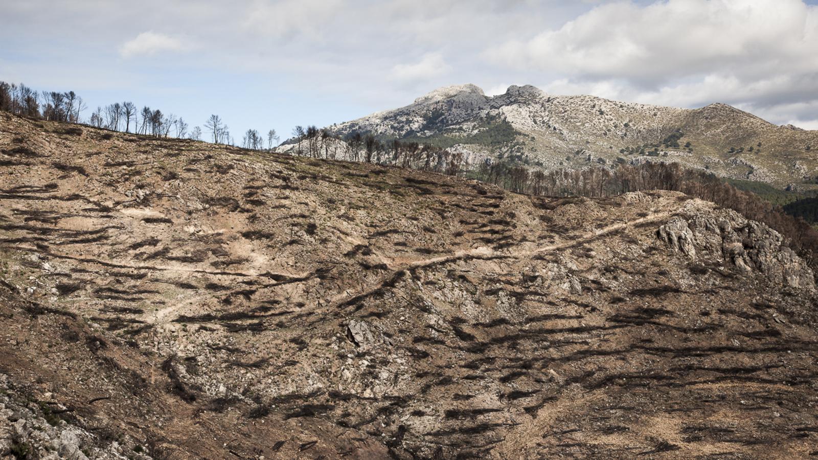 L'Incendi de la Serra de Tramuntana, sis mesos després
