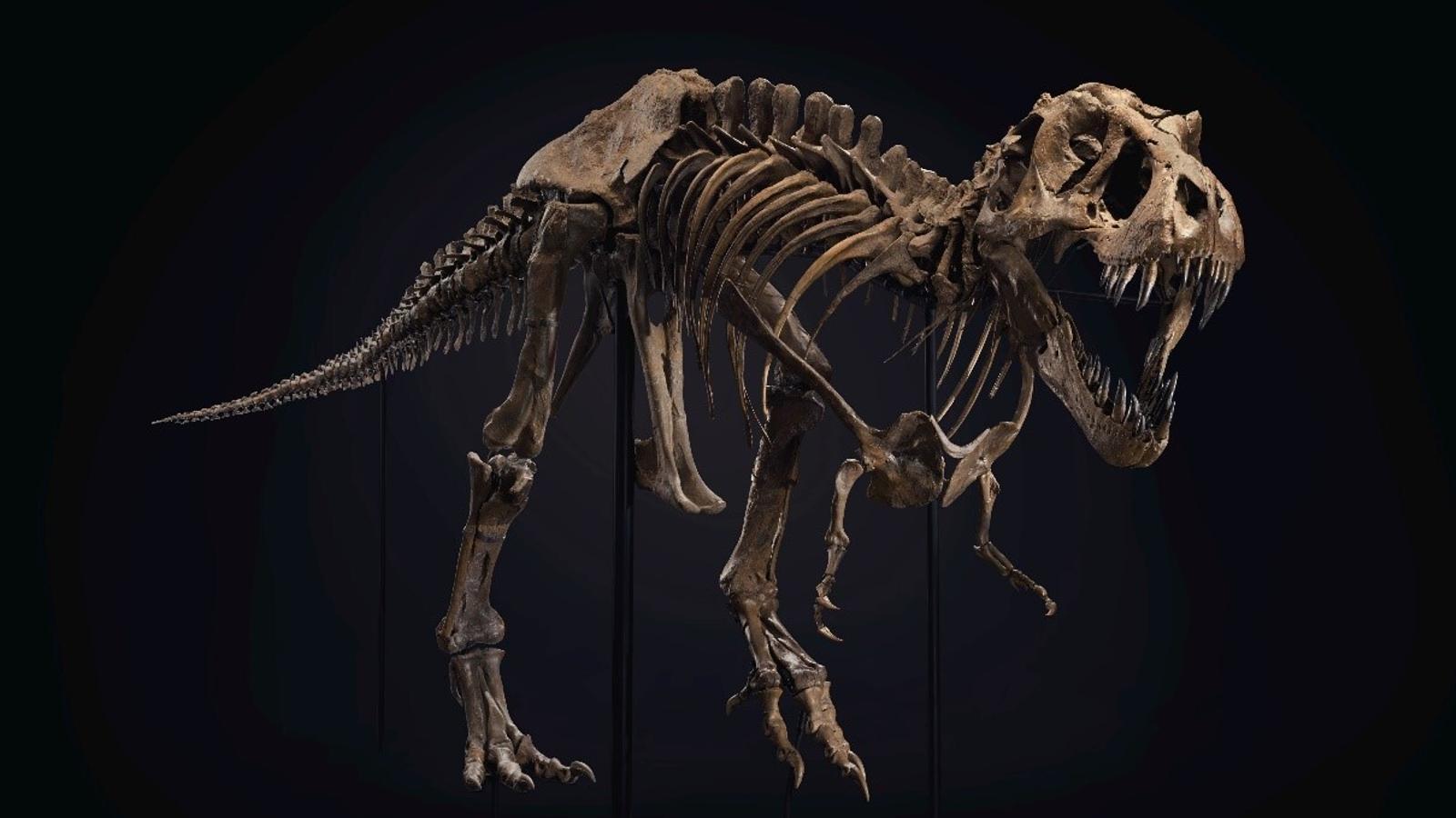 El dinosaure que exposa Christie's