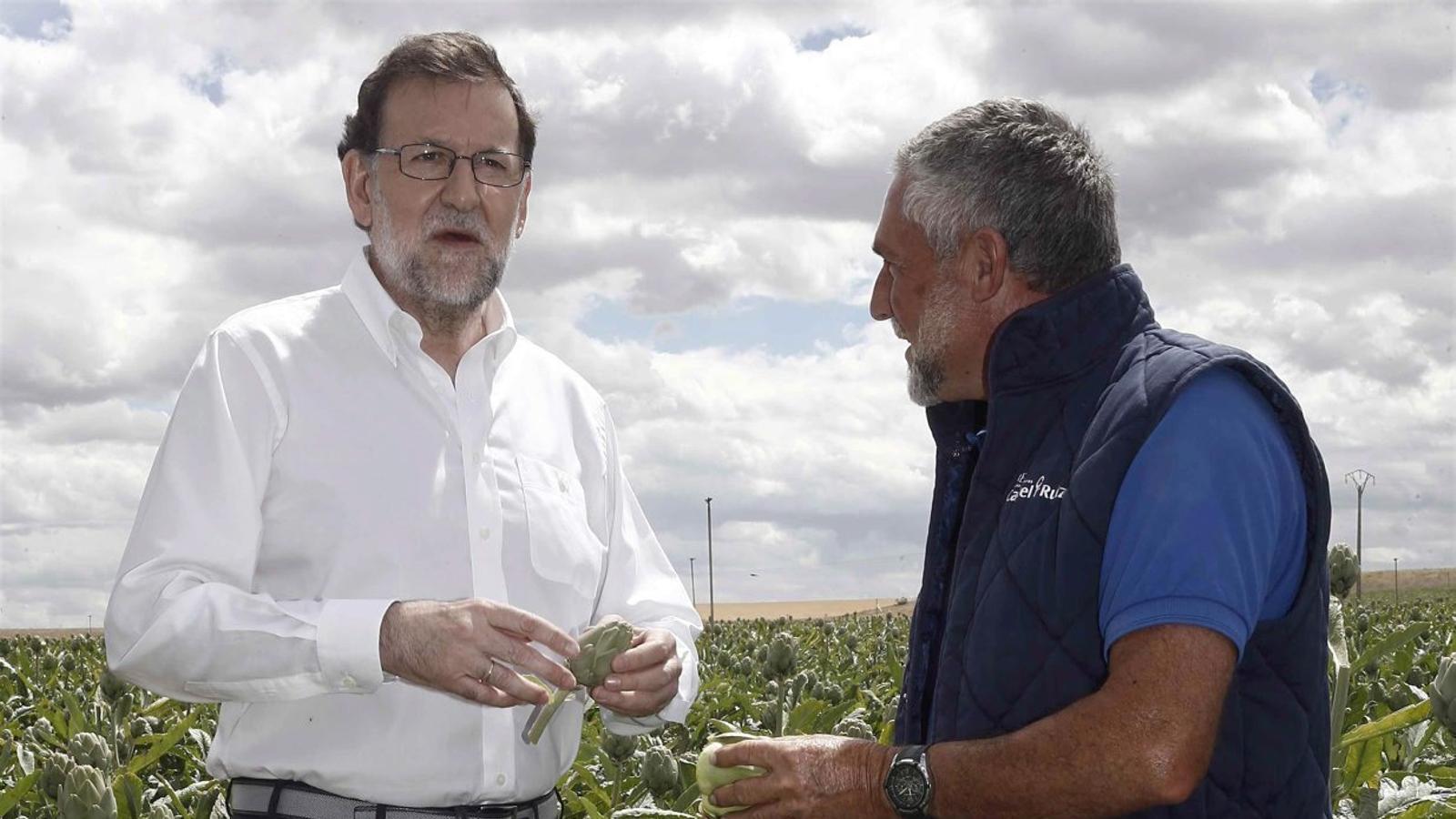 Mariano Rajoy va visitar ahir un camp de carxofes a Tudela.
