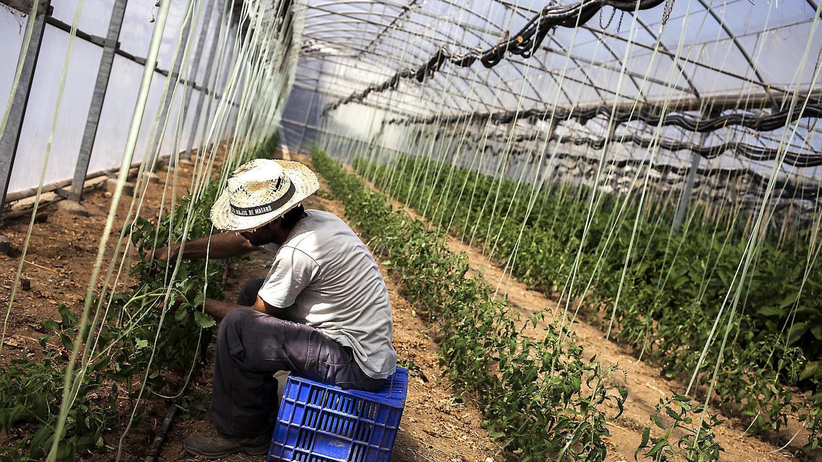La nova llei agrària genera un consens majoritari en el sector