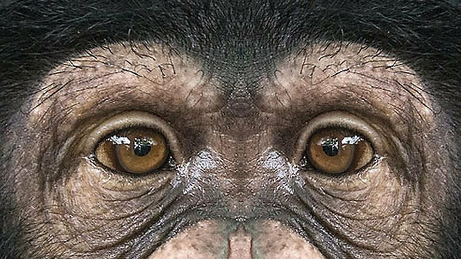 Què és un primat? I tu m'ho preguntes? Un primat... ets tu!