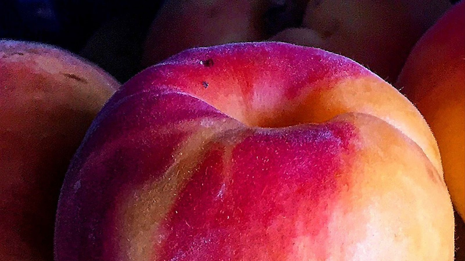 Els albercocs, la fruita que ens indica que l'estiu és a prop