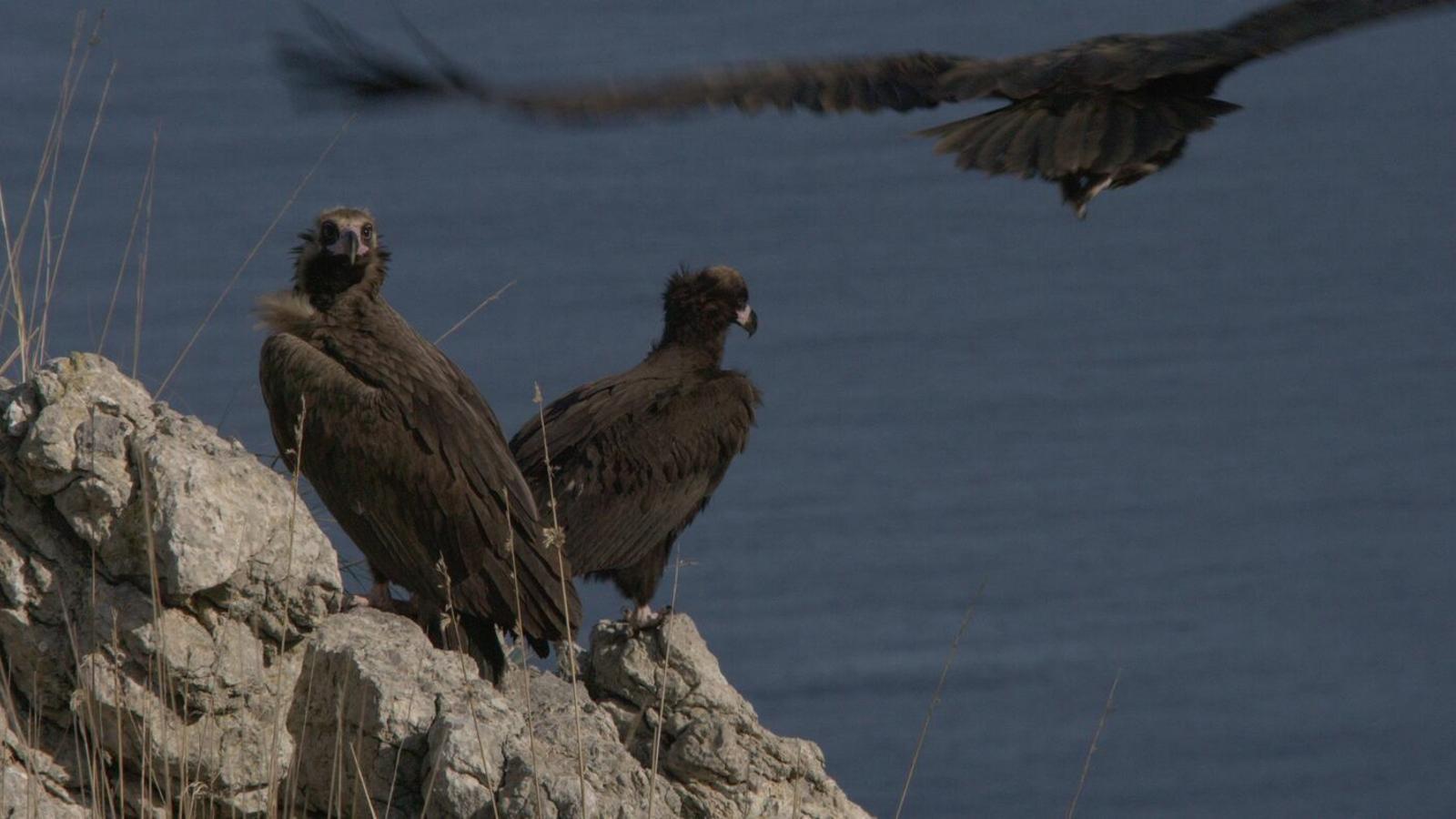 El documental 'Arxipèlag indòmit' es podrà veure una setmana més a l'Augusta