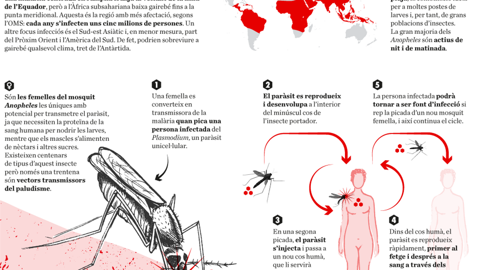La malària i l'animal més letal del planeta