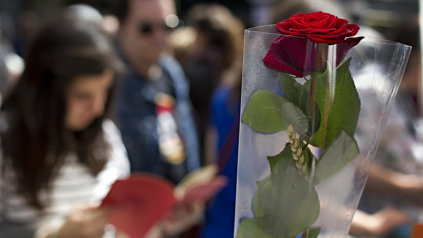 Una rosa en una parada de la Rambla, a Barcelona, la diada de Sant Jordi del 2018.