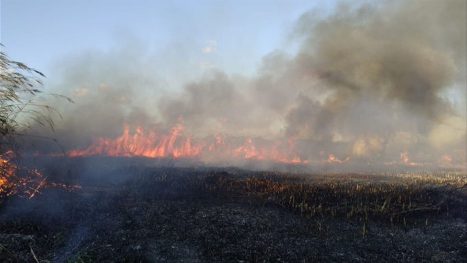 Incendi a l'Albufera de Mallorca./ IBANAT