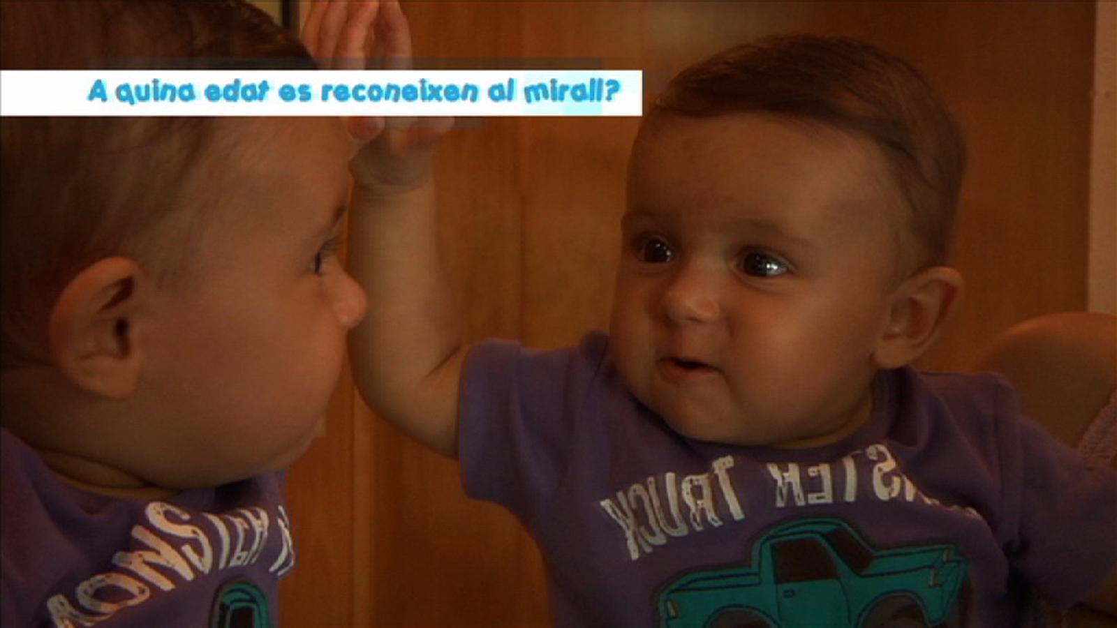 Criatures: A quina edat es reconeixen al mirall?