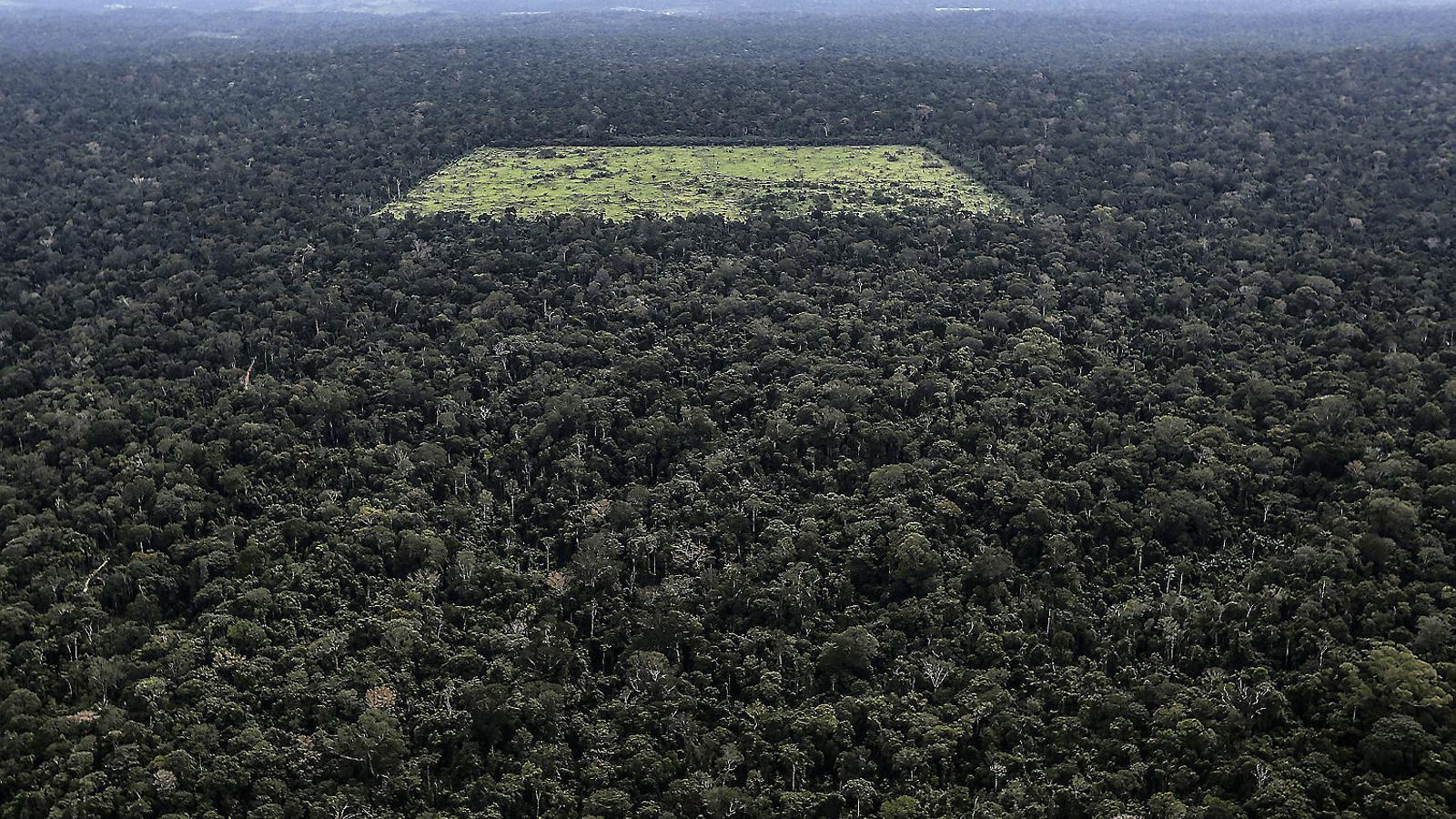 Vista aèria d'un tros de selva amazònica desforestada el 2013. Ara, amb l'arribada de Bolsonaro, es tem que es pugui accelerar aquest procés.