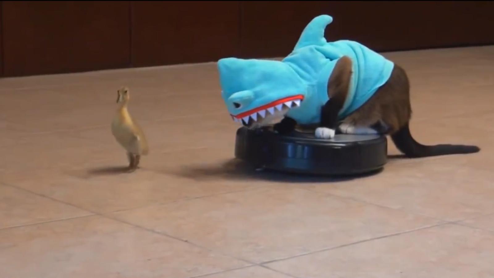 Internet: animals + aspirador Roomba