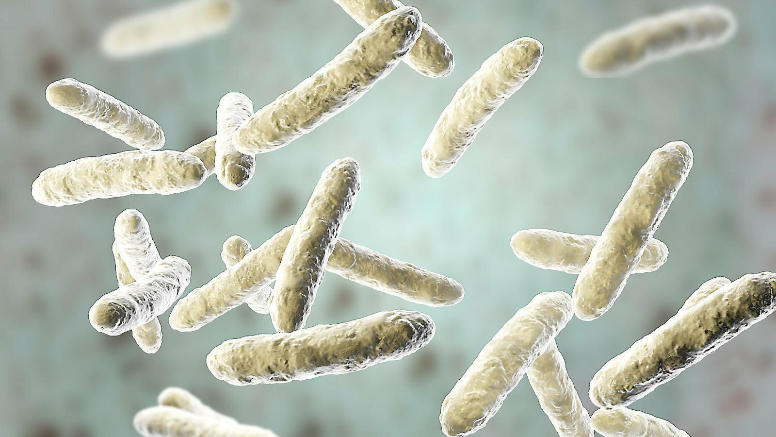 El coneixement dels microbis del cos és clau per al futur de la biomedicina