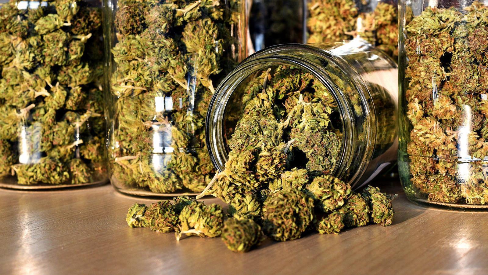 Toc d'atenció per regular el cànnabis terapèutic
