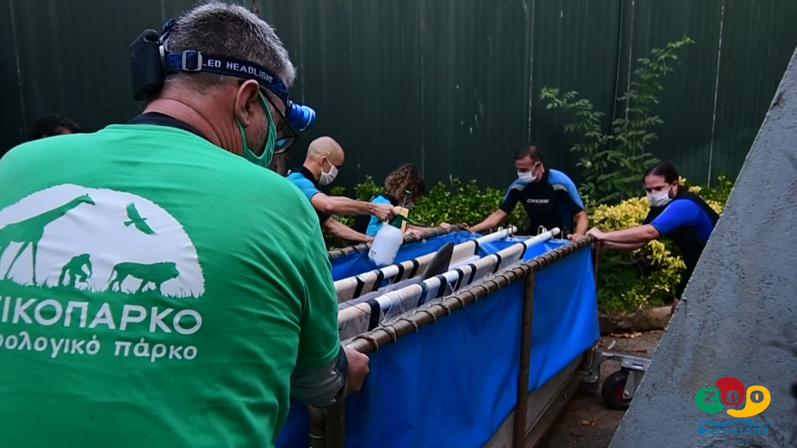 Barcelona envia els seus dofins a un zoo d'Atenes sense preavís