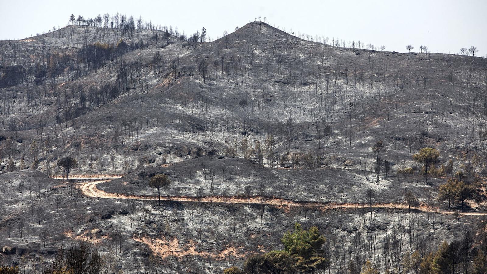 Els focs forestals seran més freqüents