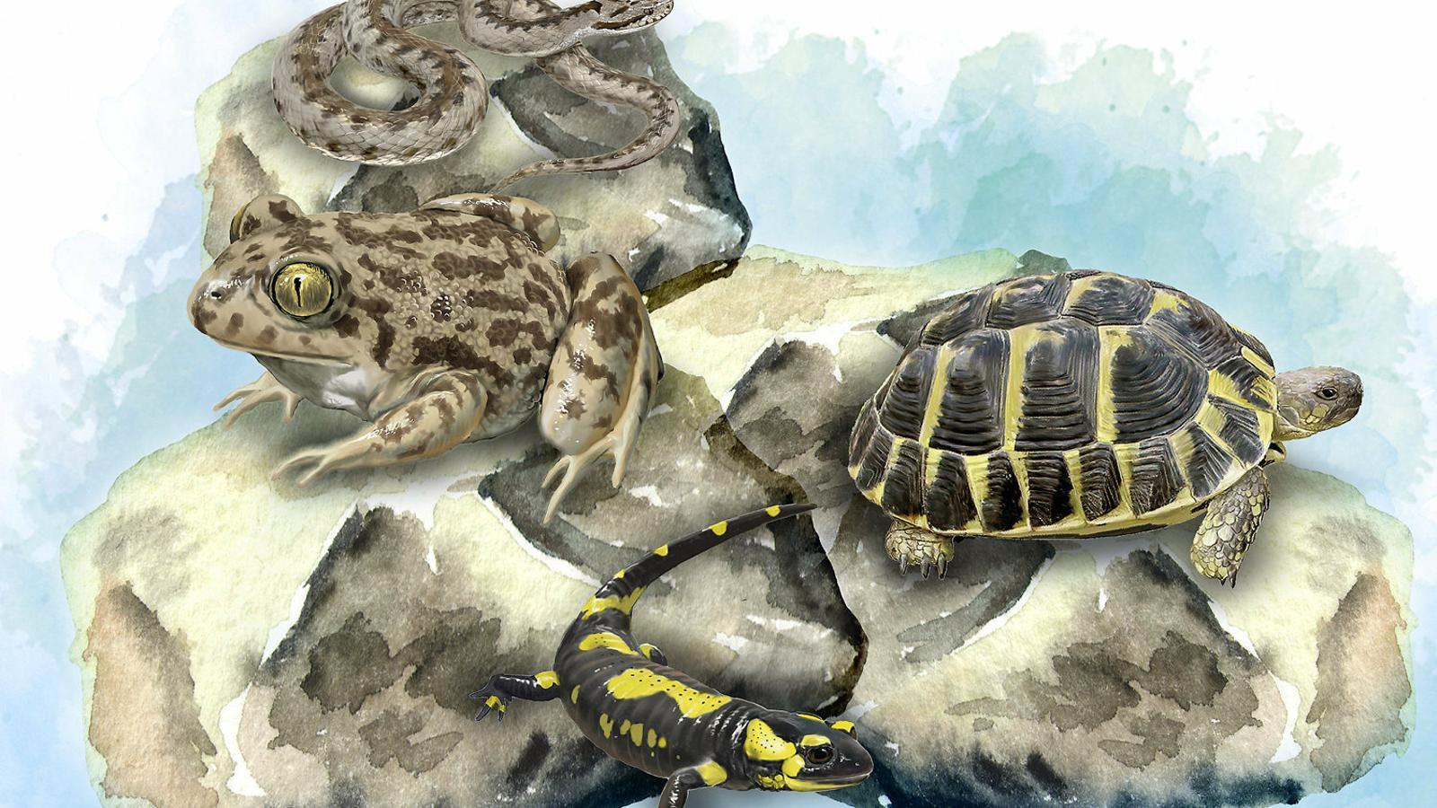 Tot el que vols saber sobre els rèptils i amfibis de Catalunya