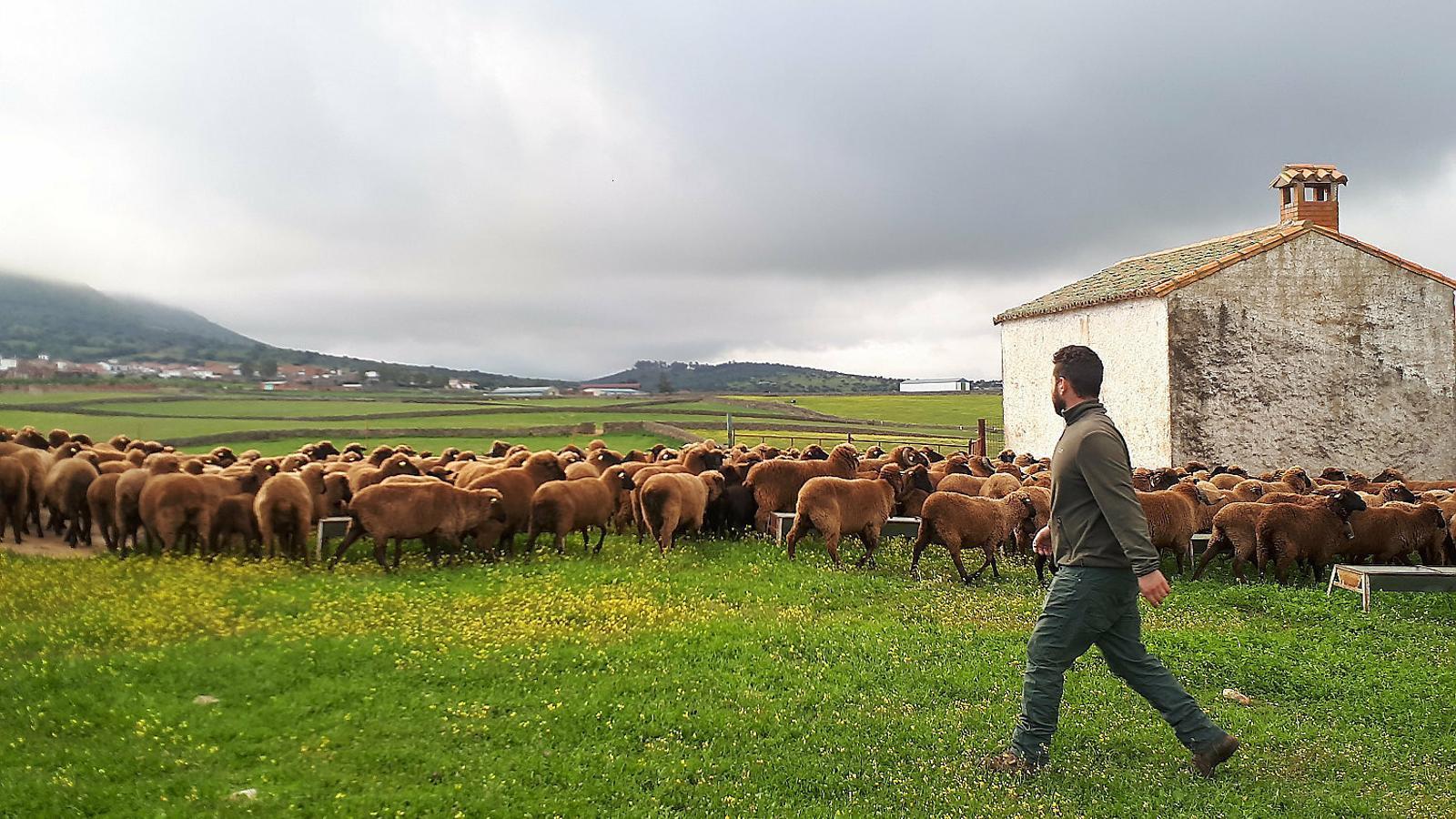 Alerta 84: El bestiar autòcton, en extinció