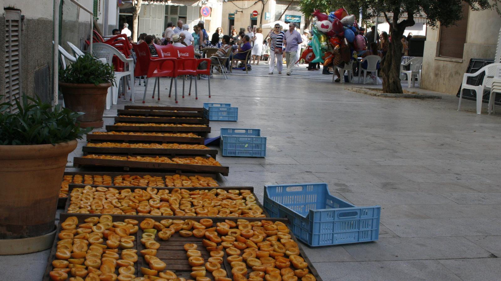 Enguany no hi haurà canyissos d'albercocs enmig de la plaça de Porreres.