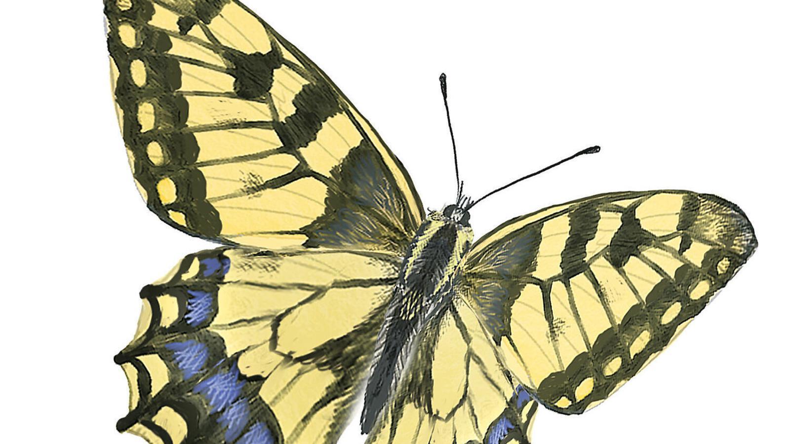 Les papallones nocturnes són espècies molt sensibles a canvis ambientals.