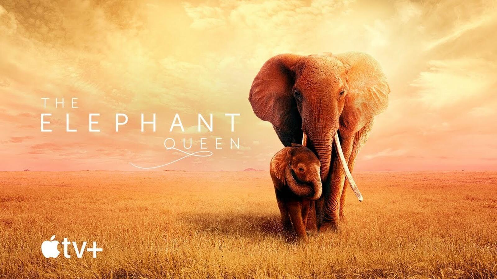 Tràiler de 'Reina de elefantes'