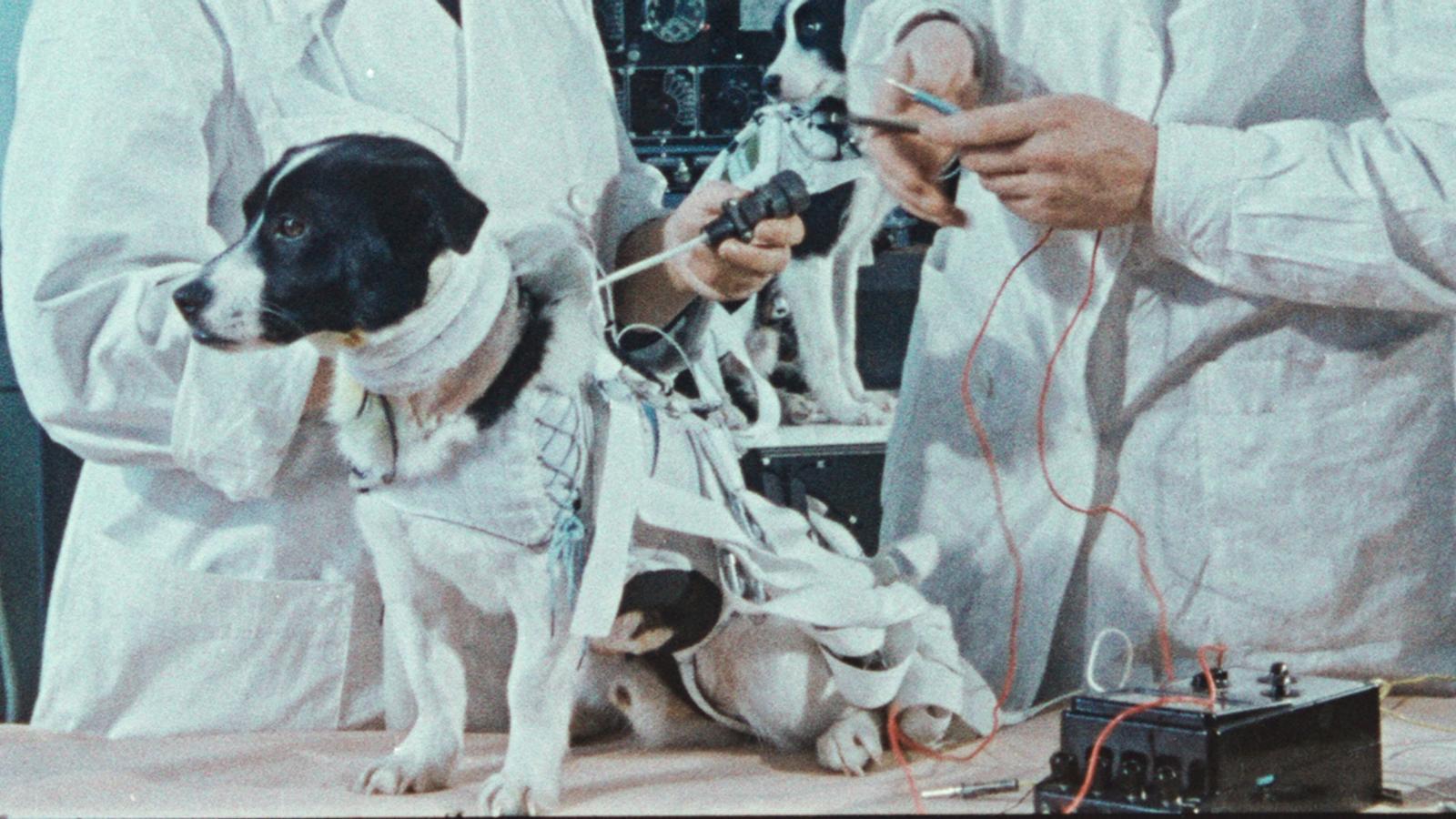 Fotograma de 'Space dogs'