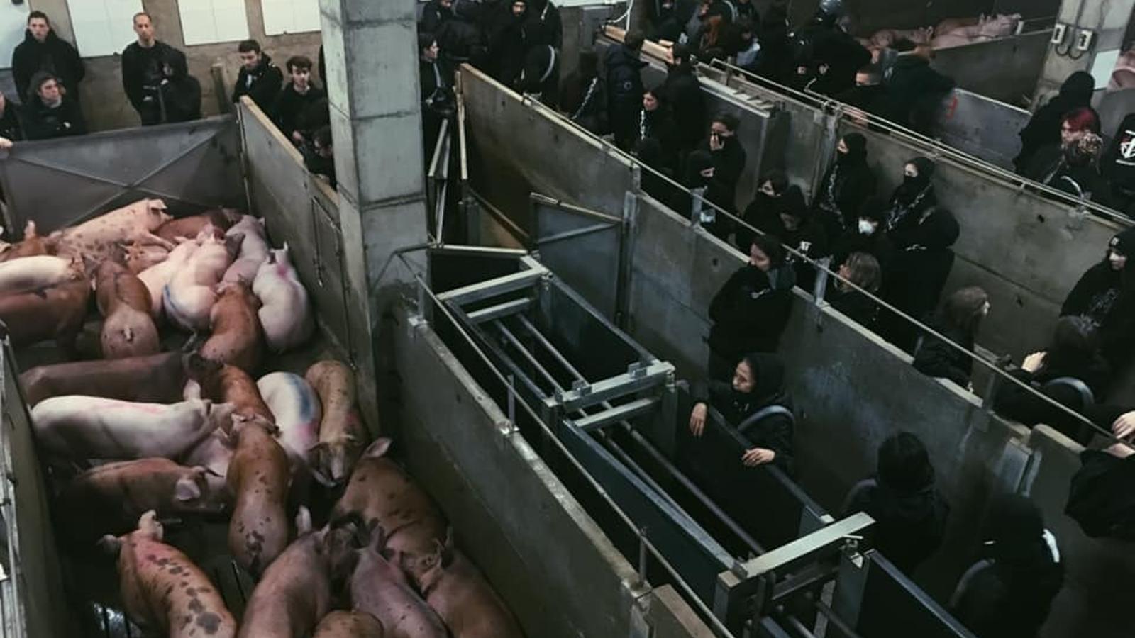 Agricultura amenaça els activistes que entrin en granges amb multes de fins a 100.000 euros