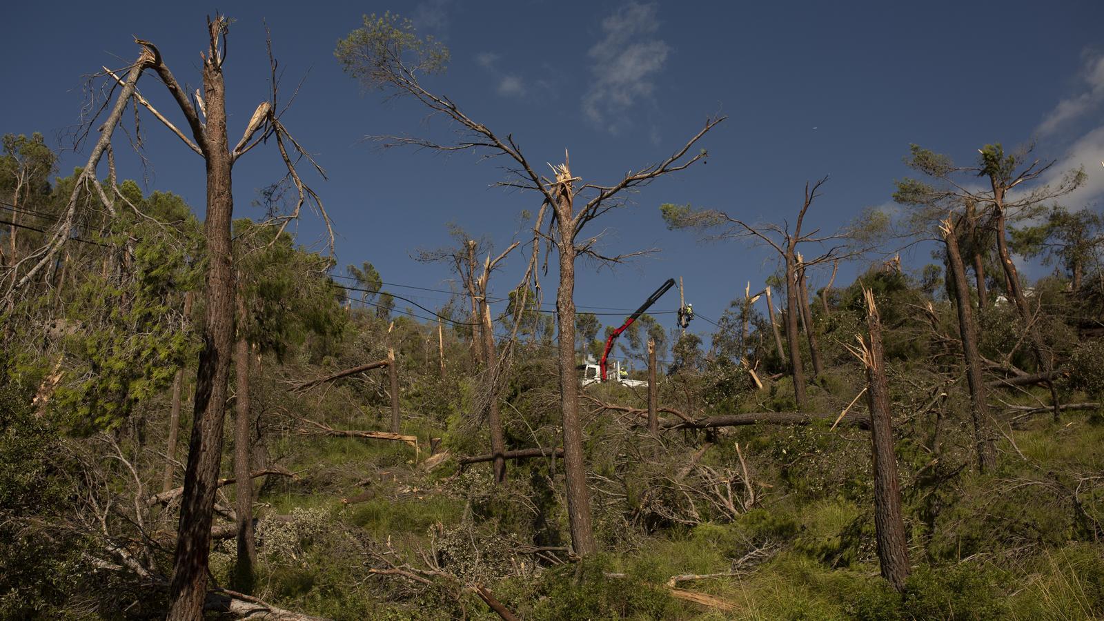 Alguns dels arbres romputs dissabte pel temporal que va assotar la Serra de Tramuntana