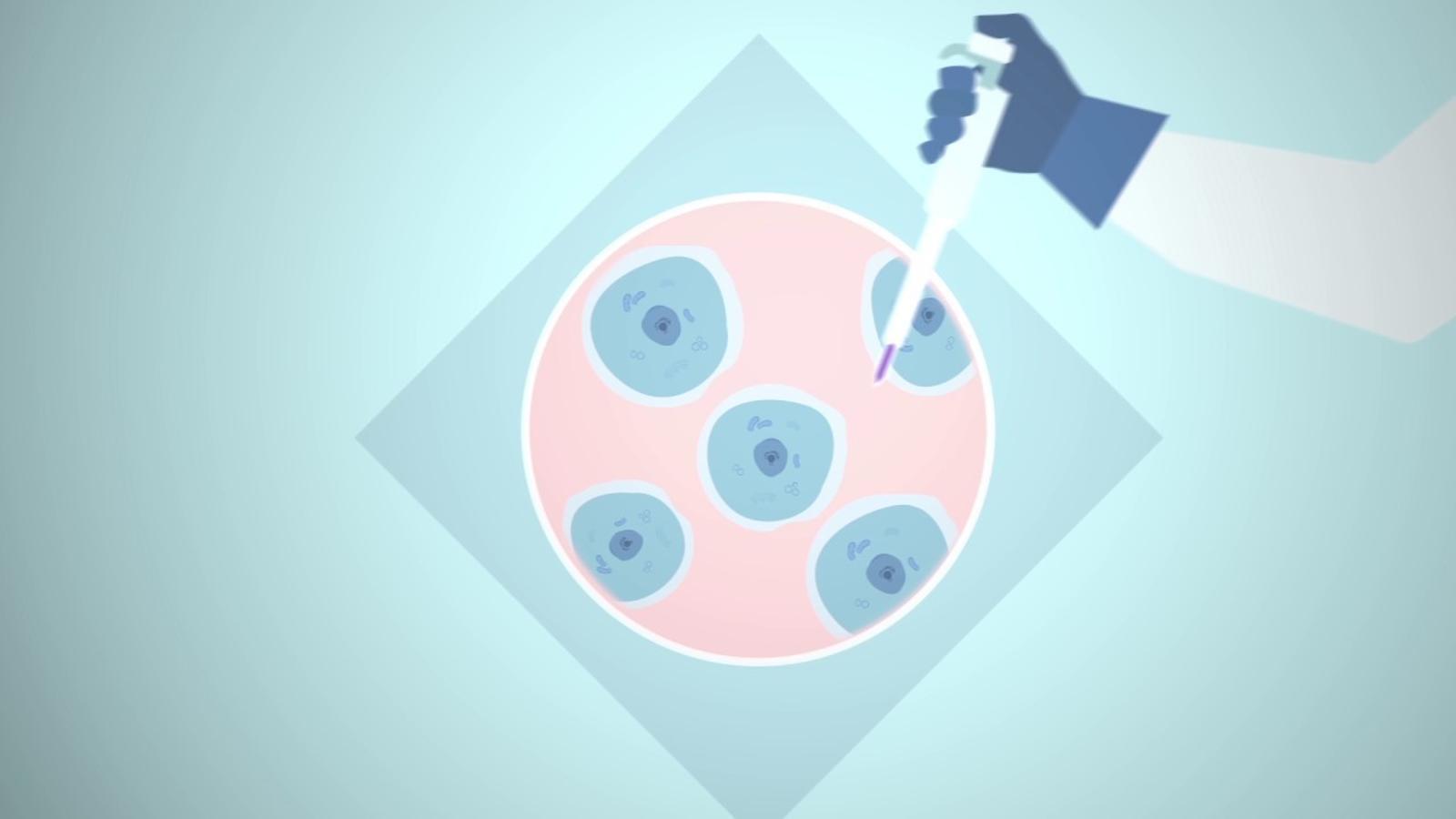 Vídeo de l'Institut de Recerca Biomèdica de Barcelona sobre la incidència dels greixos en la metàstasi