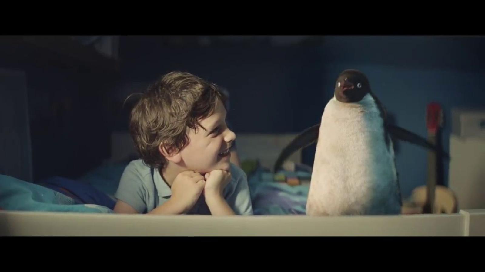 Un nen que no sap què regalar-li al seu pingüí, la història que emociona el Regne Unit