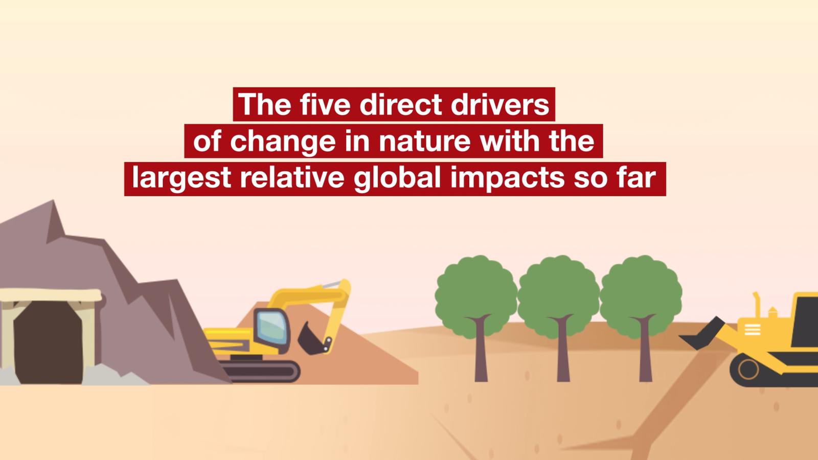 Avaluació Global de la Biodiversitat. Animació de l'IPBES: 5 causes dels impactes.