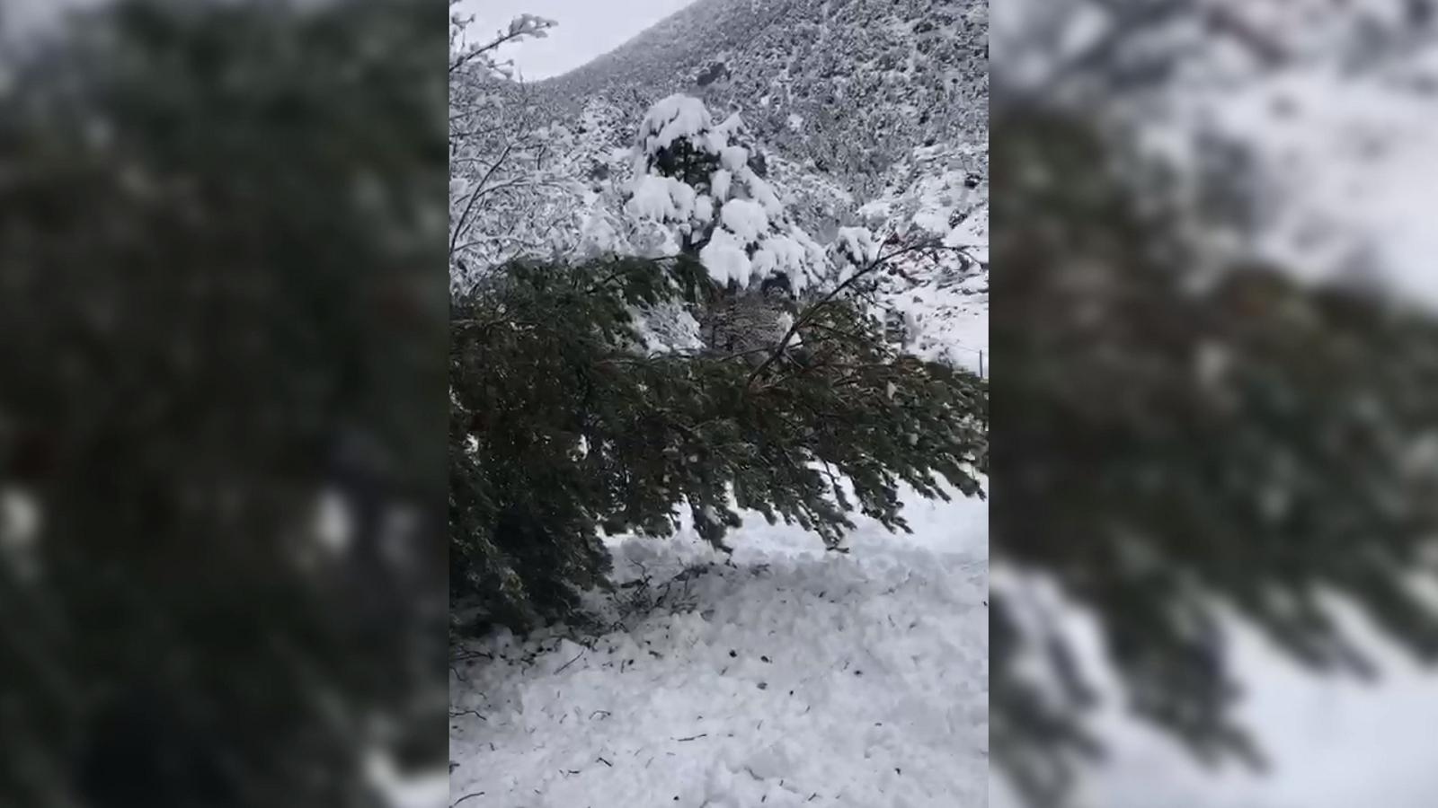Un arbre cau a la carretera de Fontaneda