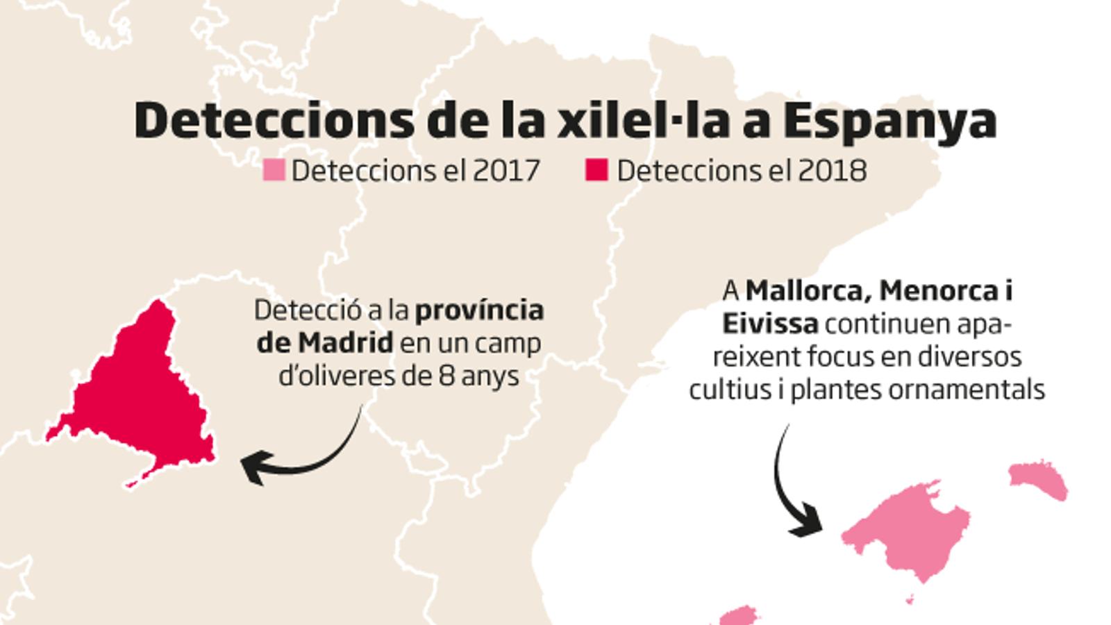 La xilel·la a Espanya