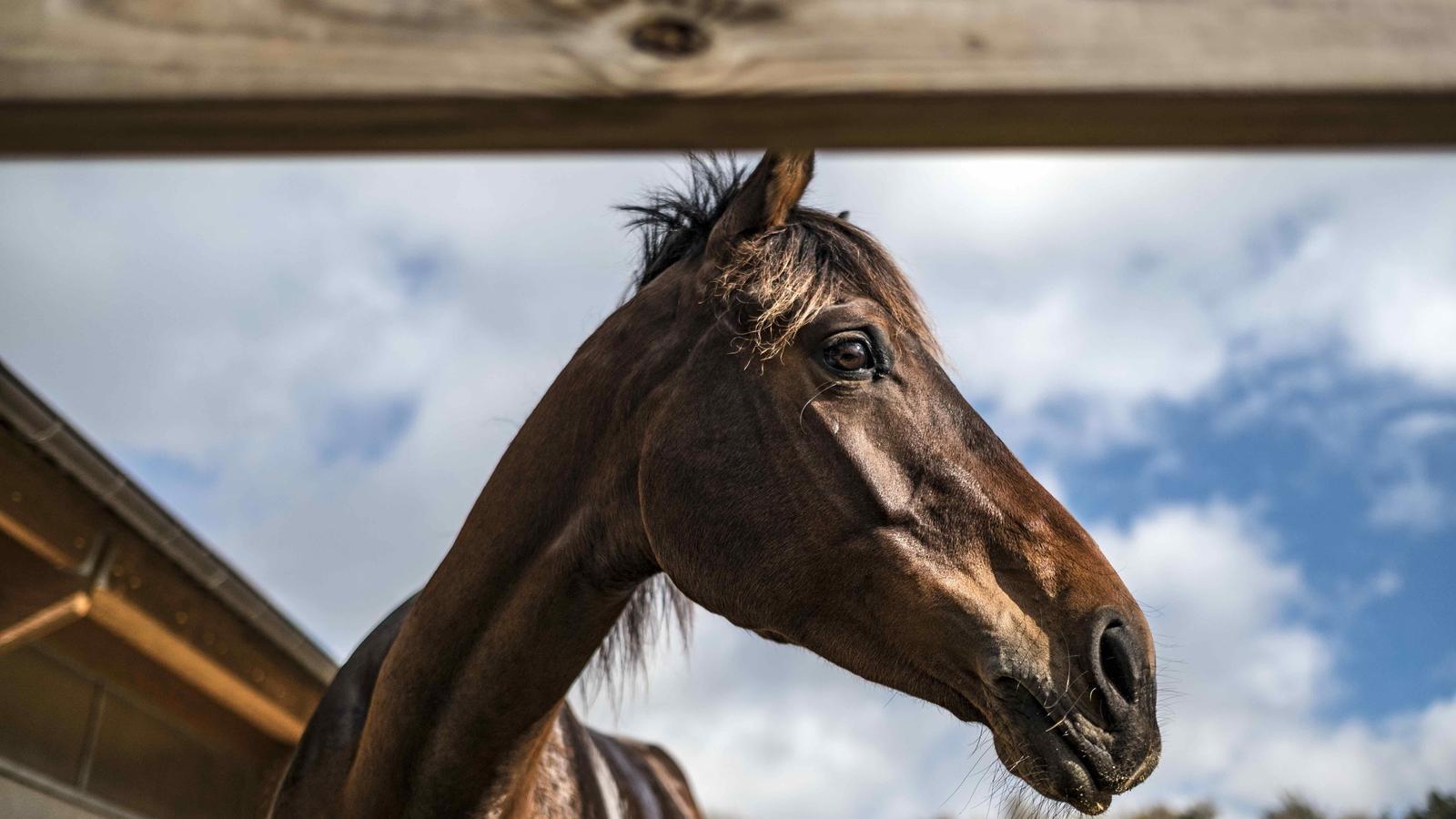 Història de mil cavalls