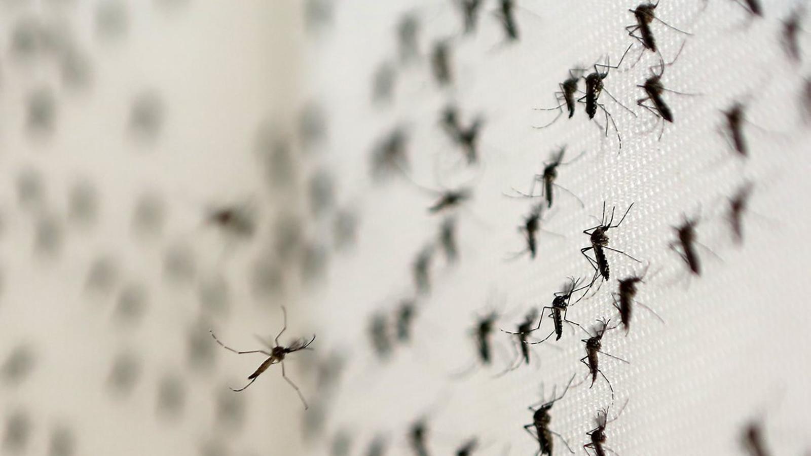 Quina por ens ha de fer el Zika?