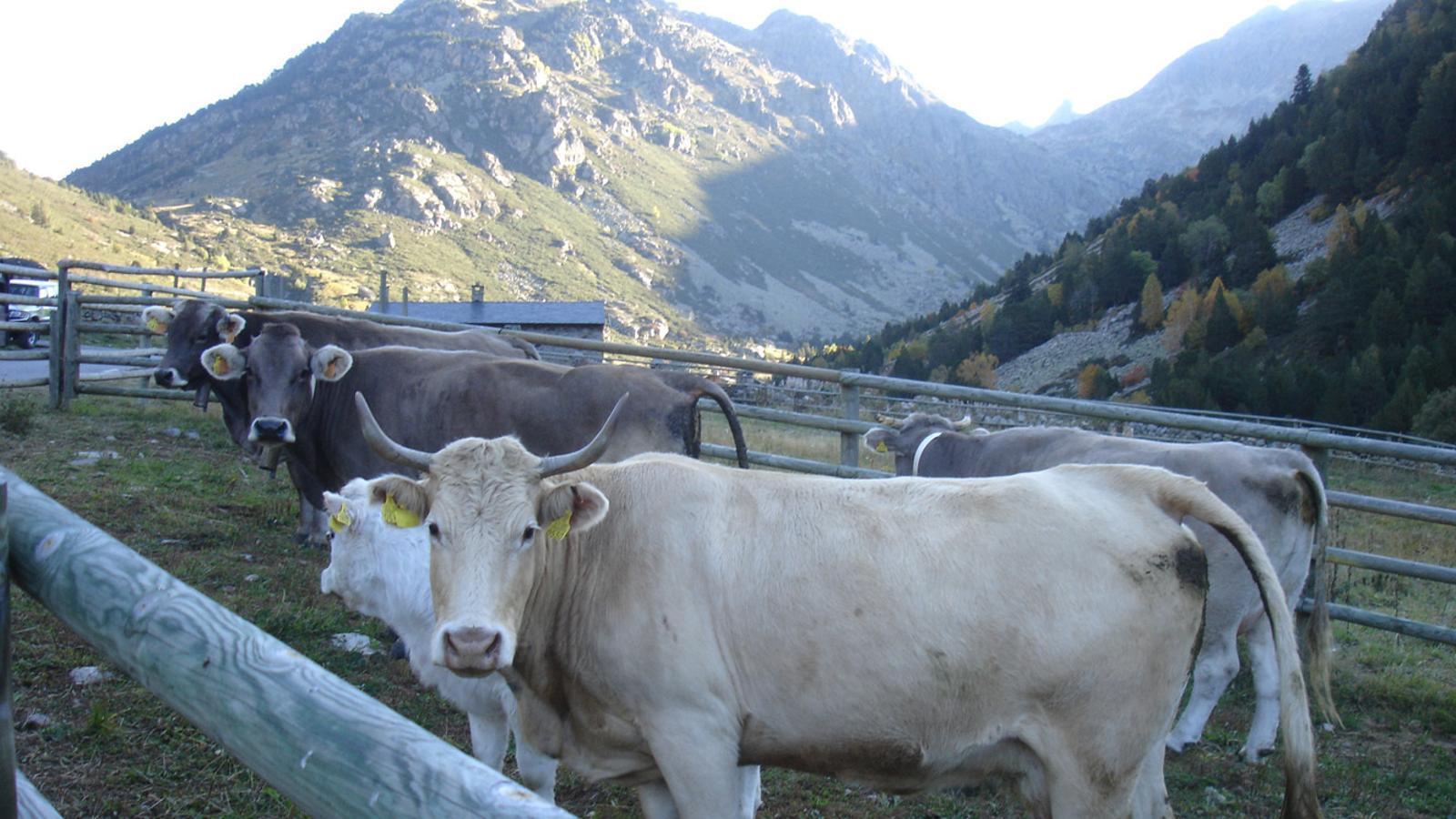 Animals en una explotació ramadera. / ARXIU ANA