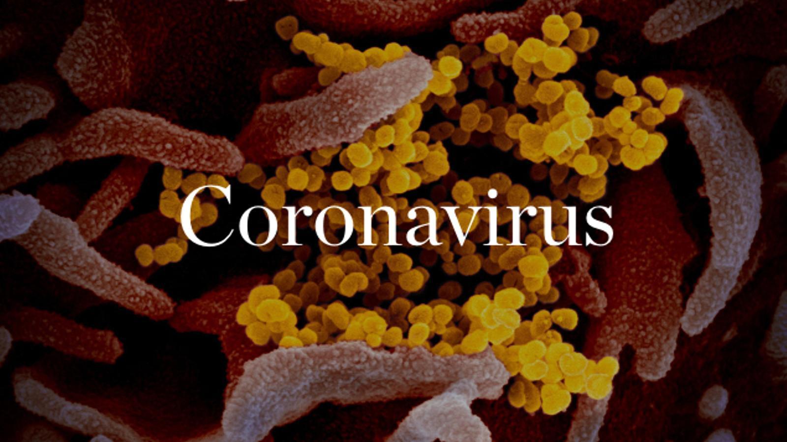 Rep diàriament al teu correu les últimes informacions sobre la pandèmia del Covid-19
