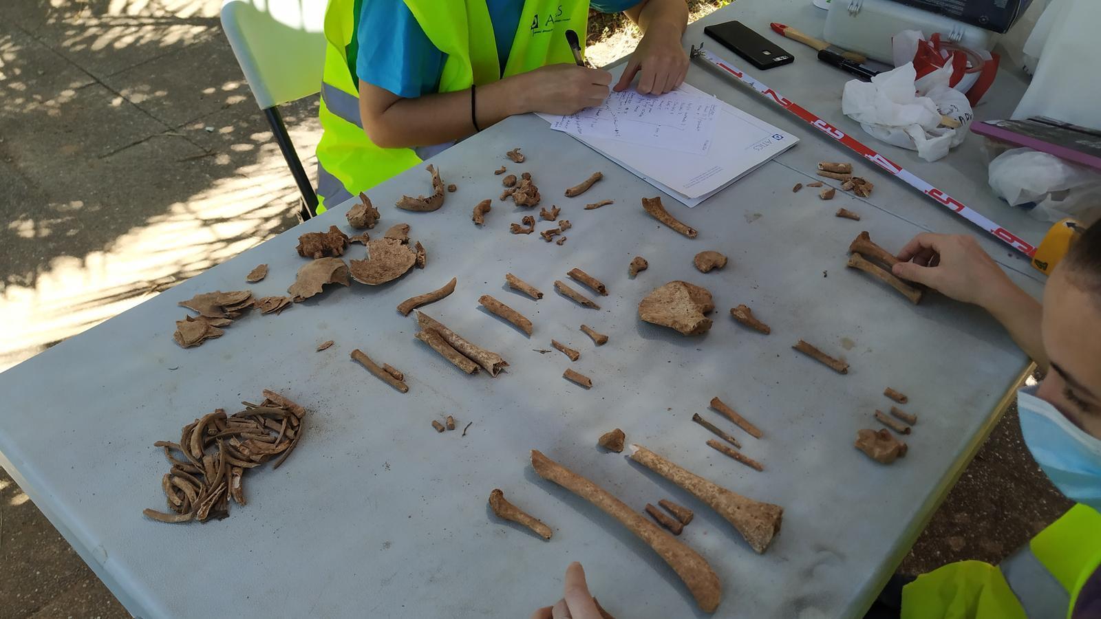Alguns dels 3.500 fragments d'ossos localitzats a la fossa de Sencelles