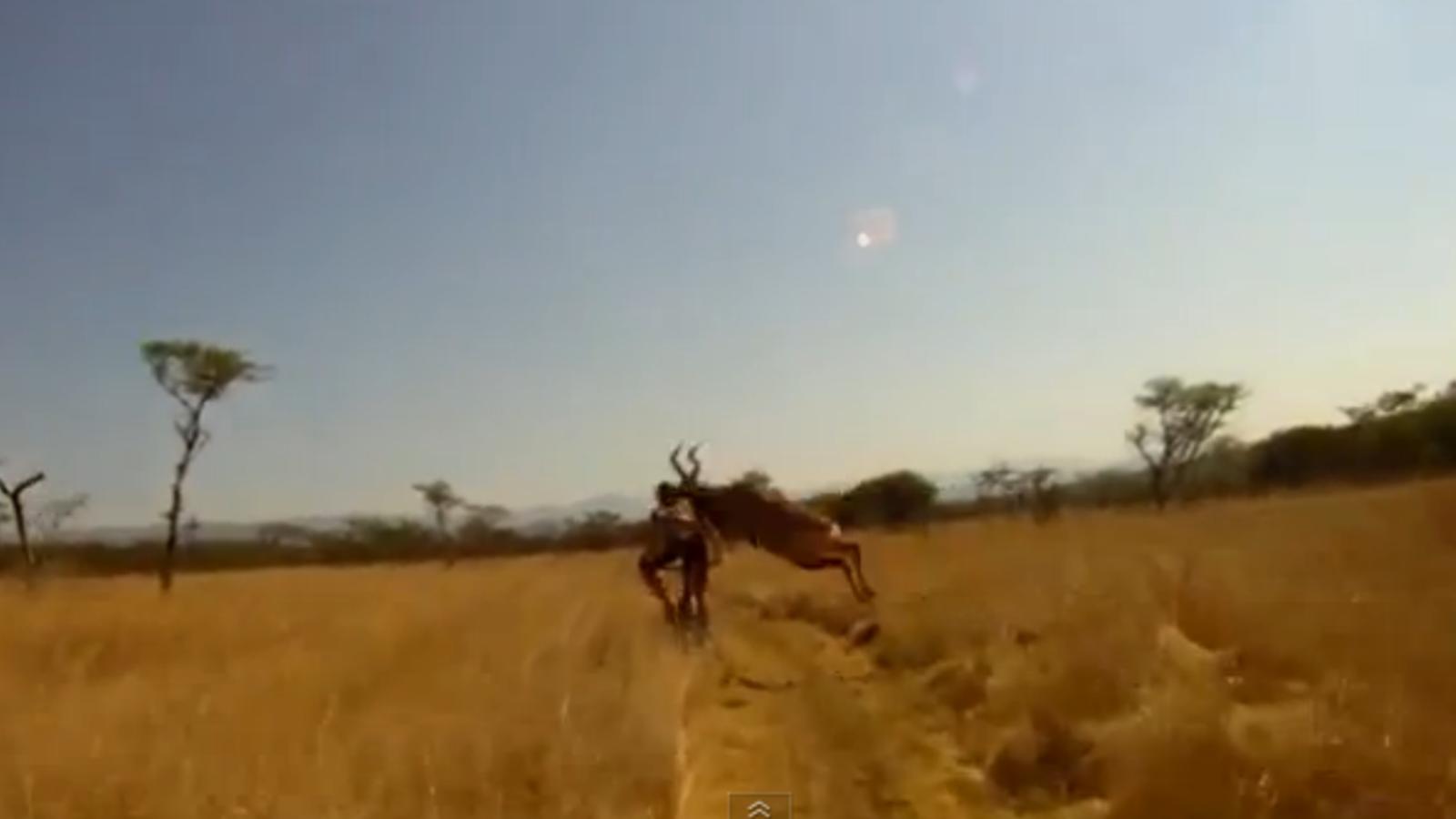 Un antílop ataca un corredor de mountain bike en una cursa a Sudàfrica.
