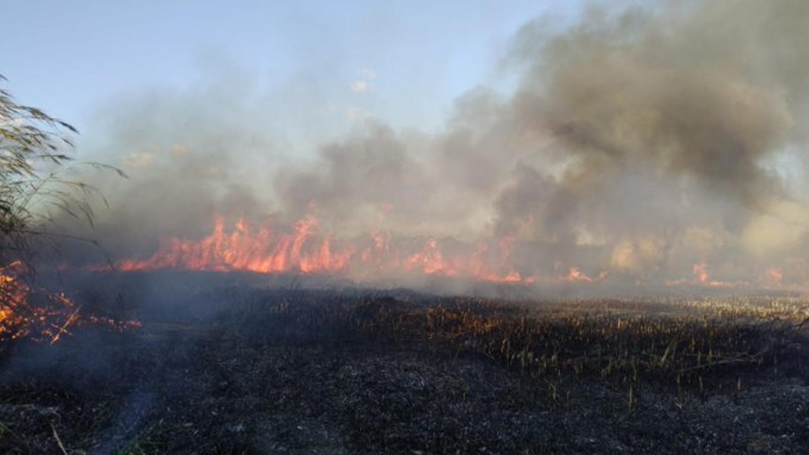 L'incendi de l'Albufera Mallorca obliga a desallotjar les cases de la zona