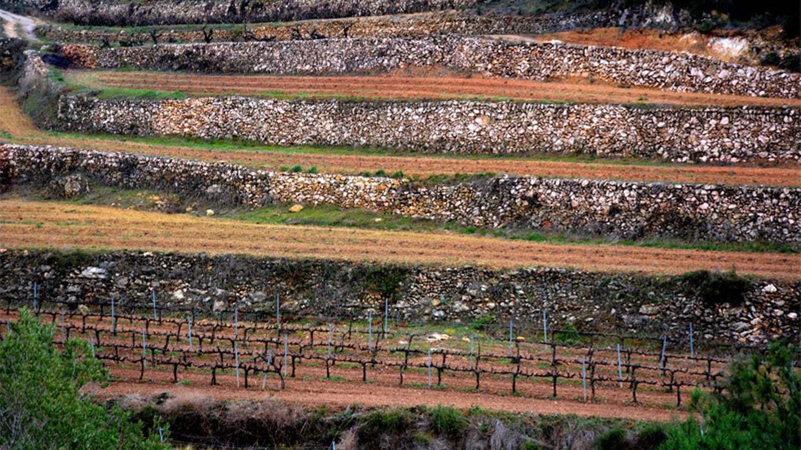 Terrasses amb pedra seca al Penedès
