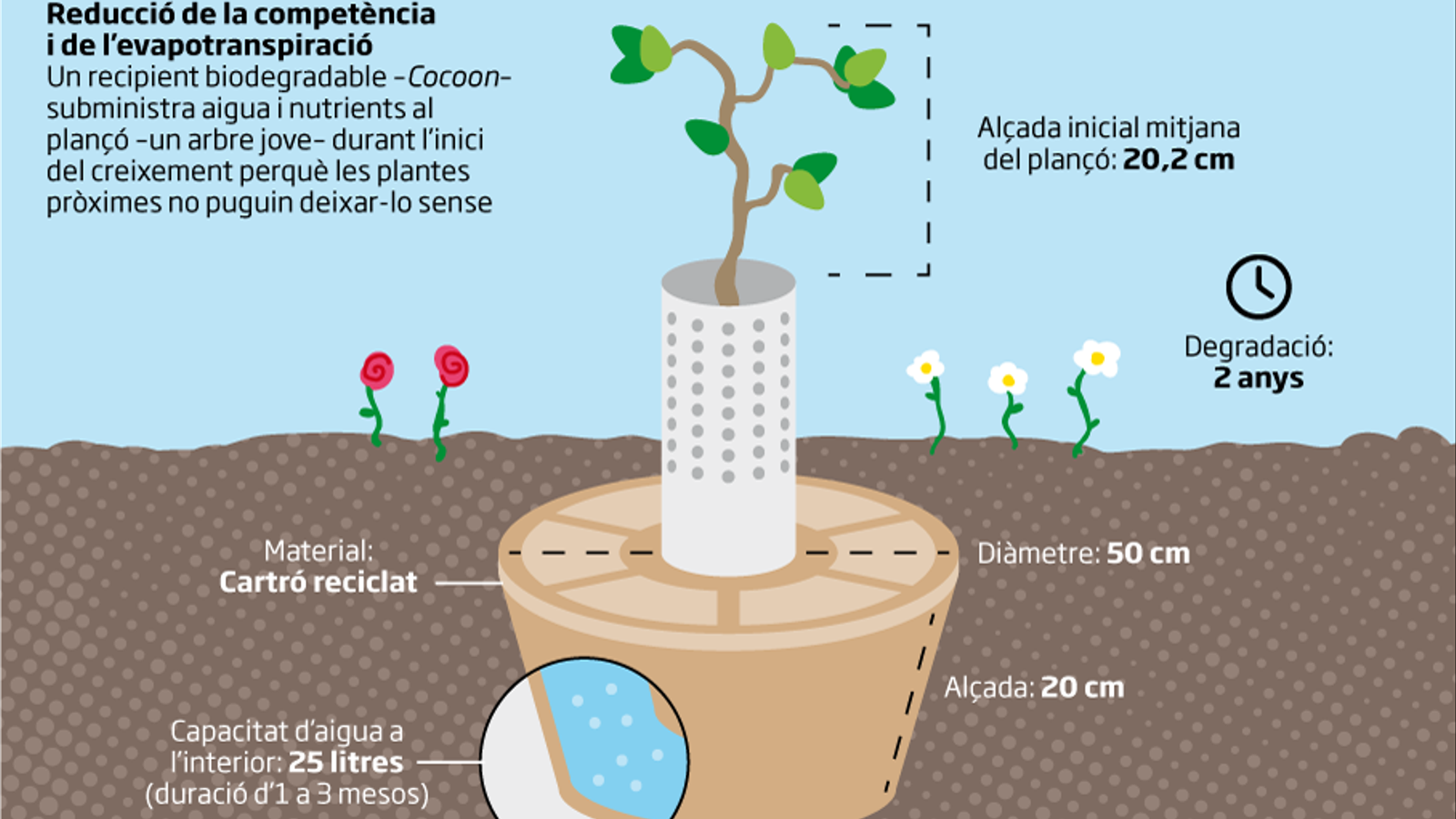 El Cocoon, un recipient de cartró que es planta a terra ple d'aigua per regar l'arbre.
