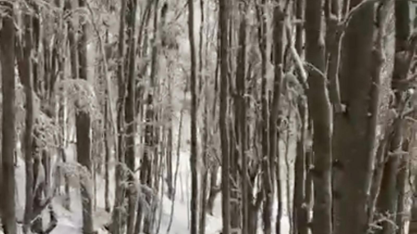 El Montseny queda enfarinat per primer cop aquesta tardor / MIQUEL VENDRELL