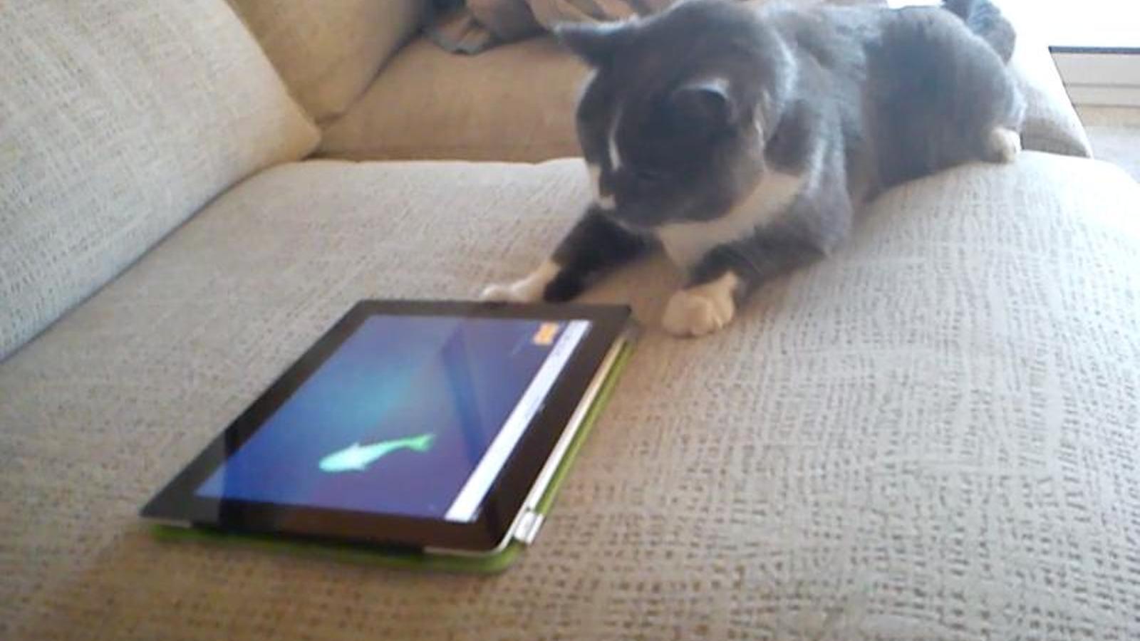 Videojocs per a gats (II)