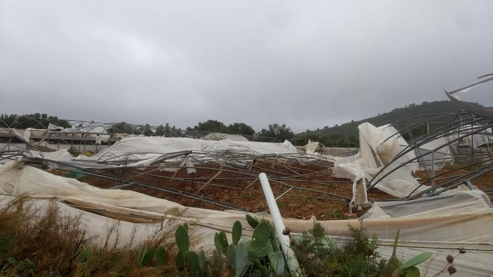 La tempesta arrasa hivernacles, oliveres i vinyes de pagesos de Mallorca