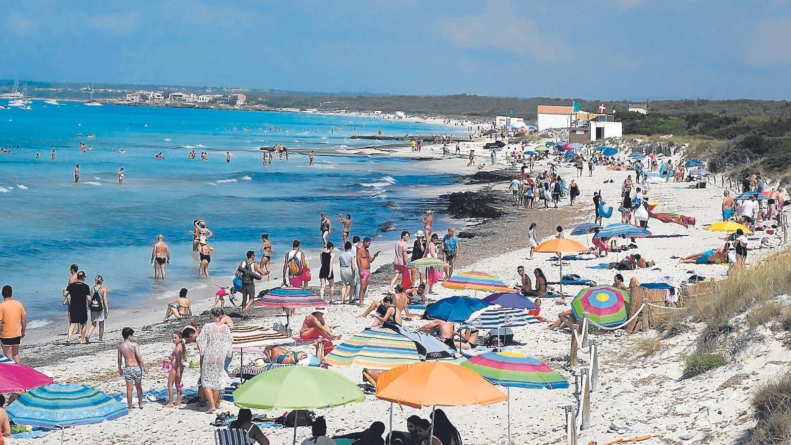 A les platges de Campos, amb la posidònia