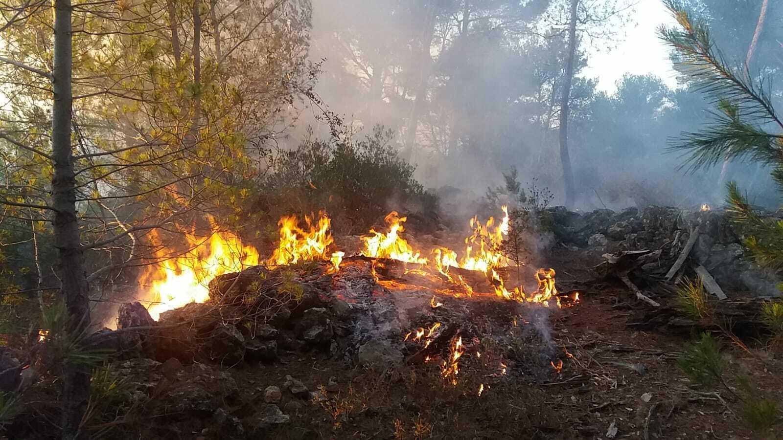 Incendi forestal intencionat a Esporles