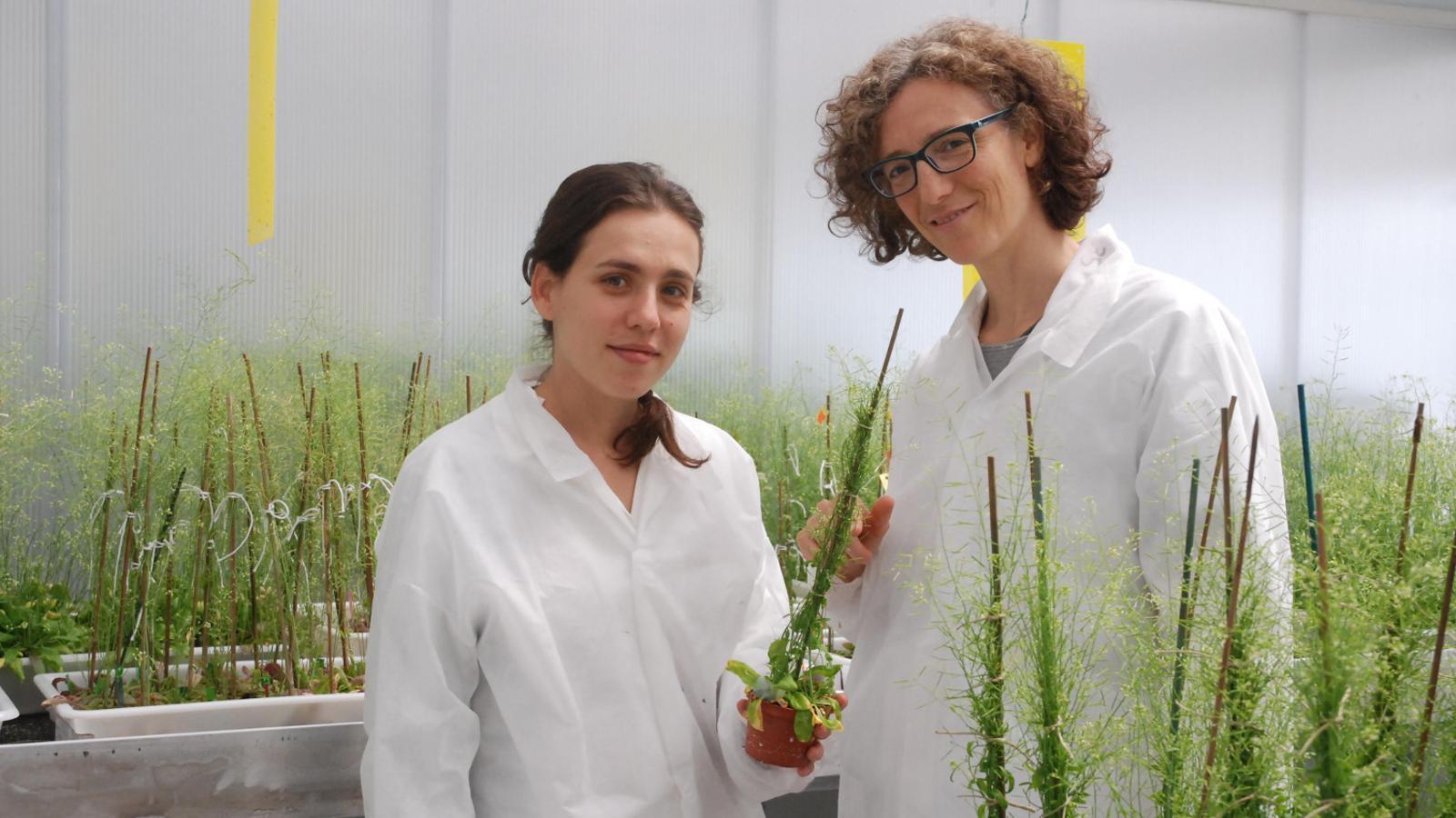 Les investigadores Guiomar Martín i Elena Monte, del Centre de Recerca en Agrigenòmica