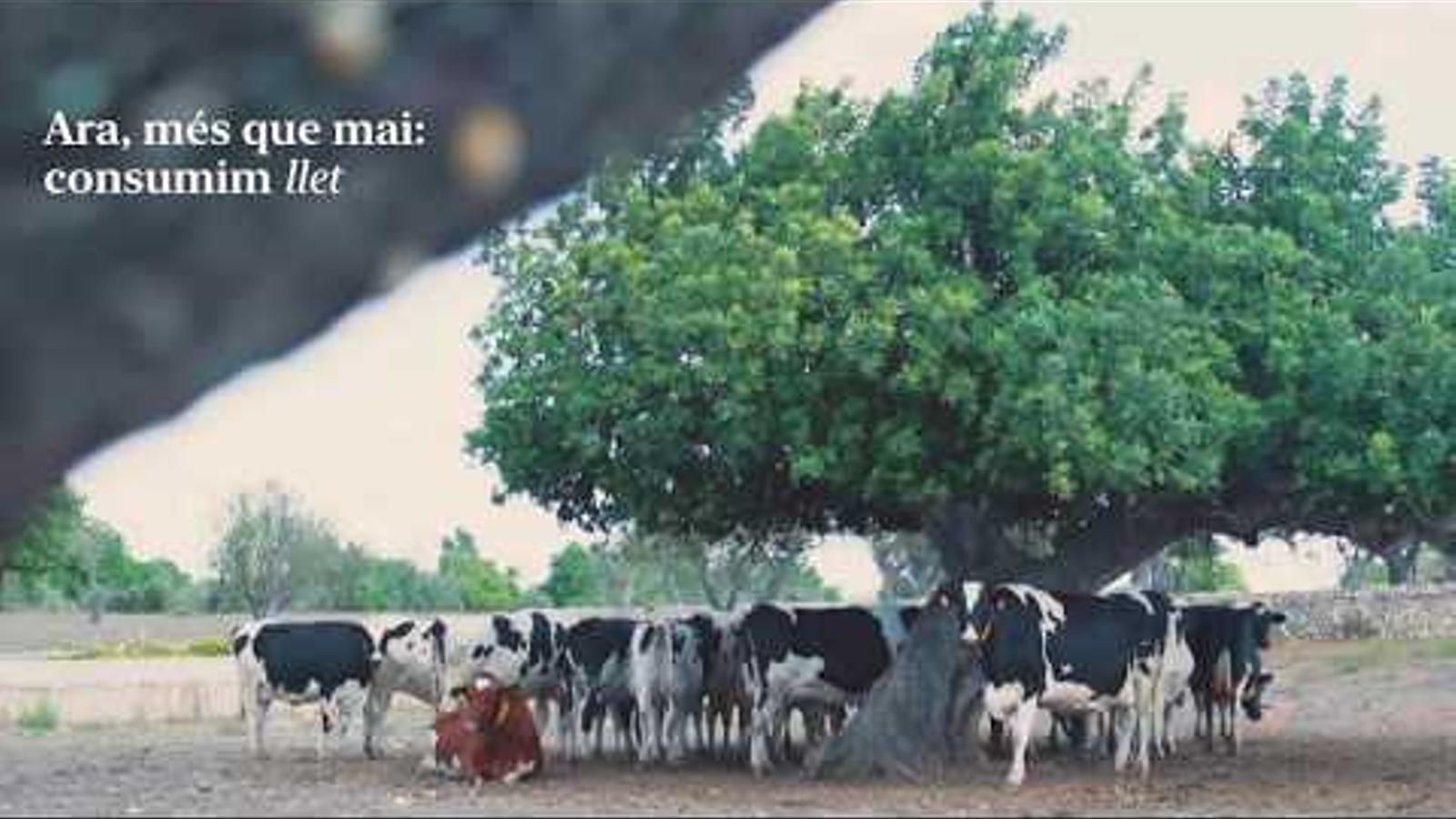 AGAMA - Consumim llet de les granges de Mallorca