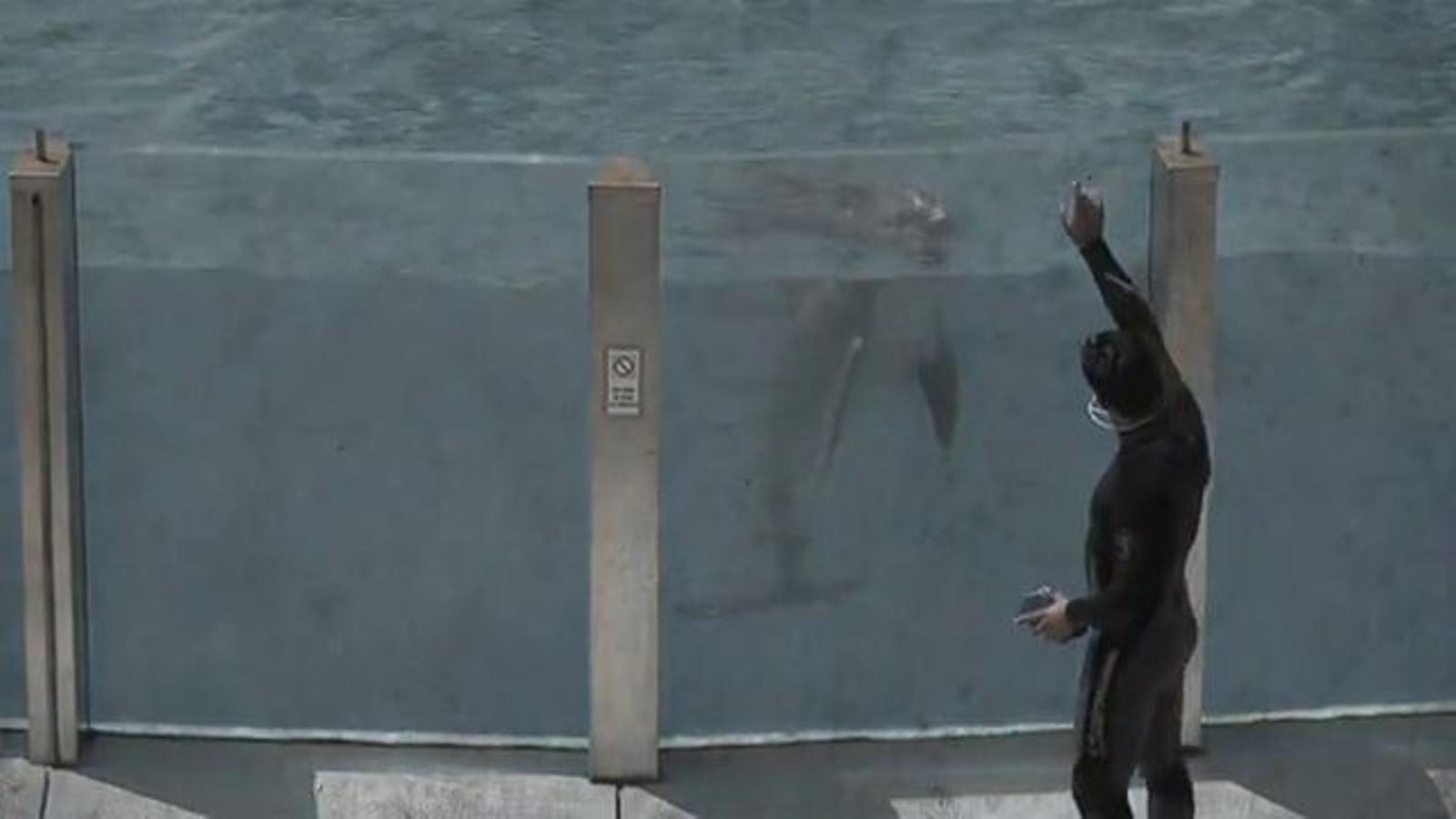 Campanya contra els delfinaris dels zoos i els aquàriums