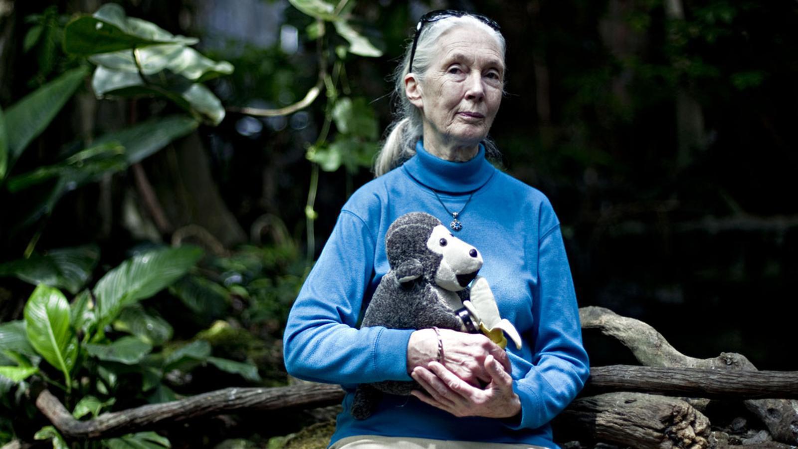 Els 5 motius per a l'esperança de Jane Goodall