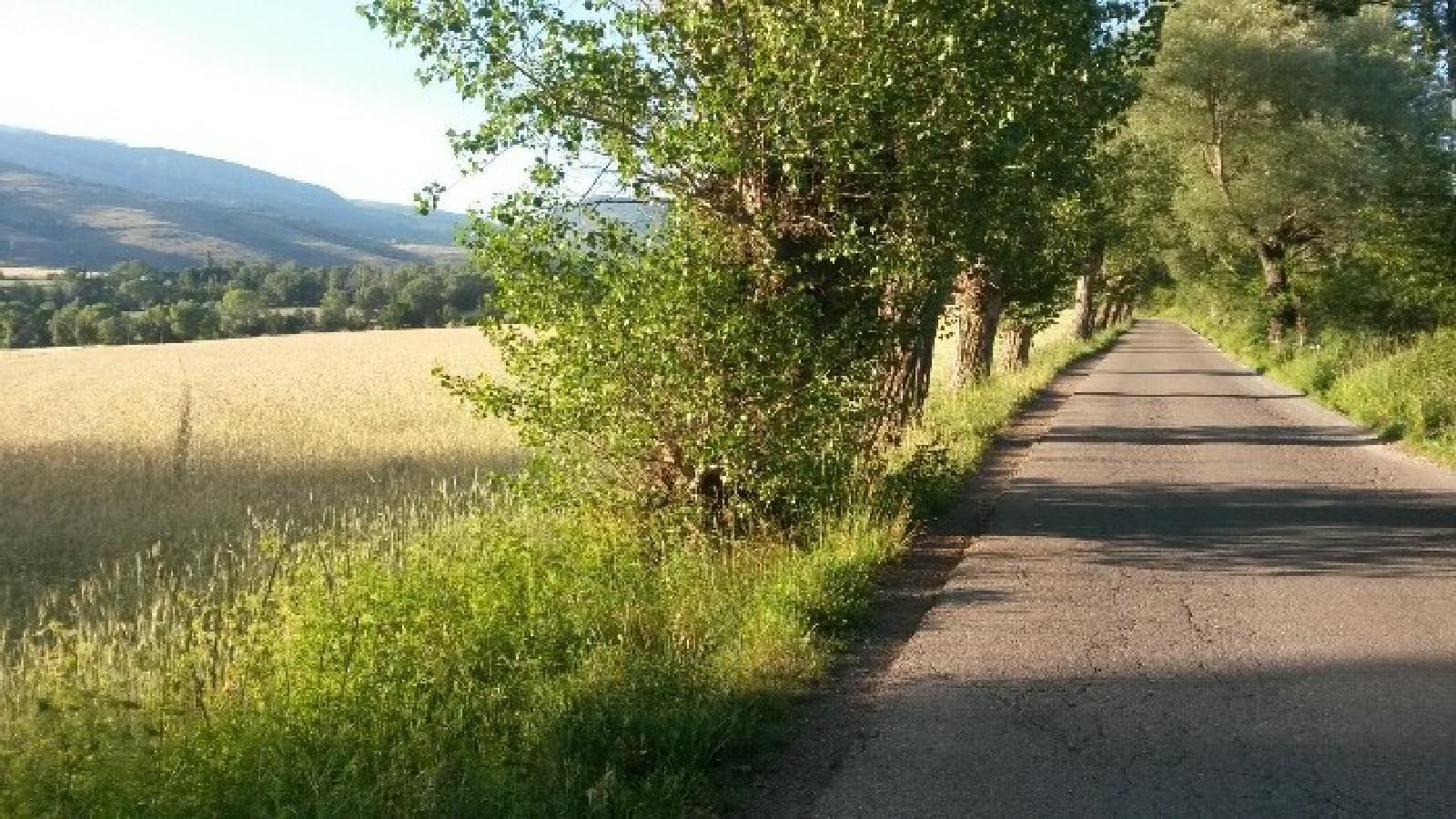 El camí d'Ur. / WIKILOC